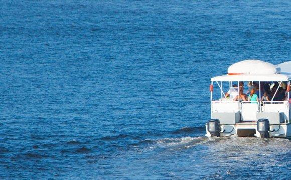 Dolphin & Dinner Cruises
