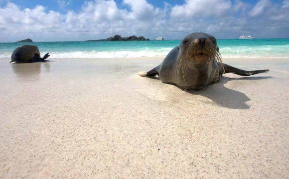 Top Galapagos Cruises, Tours